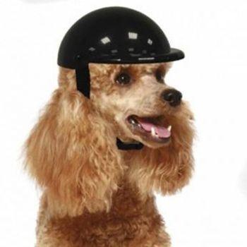 Casque de moto pour chien