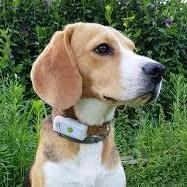 Weenect collier GPS pour chien ( Application IOS, ANDROÏD )