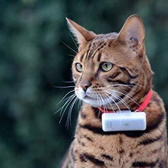 Weenect collier GPS pour chat ( Application IOS, ANDROÏD)