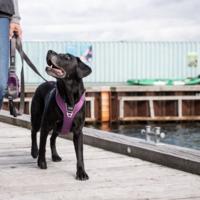 Nouveau Harnais Dog Copenhagen Comfort Walk Pro™