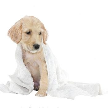 Soins pour chiens