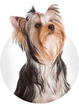 boutique en ligne produits pour chiens et chats en belgique azoo e boutique. Black Bedroom Furniture Sets. Home Design Ideas